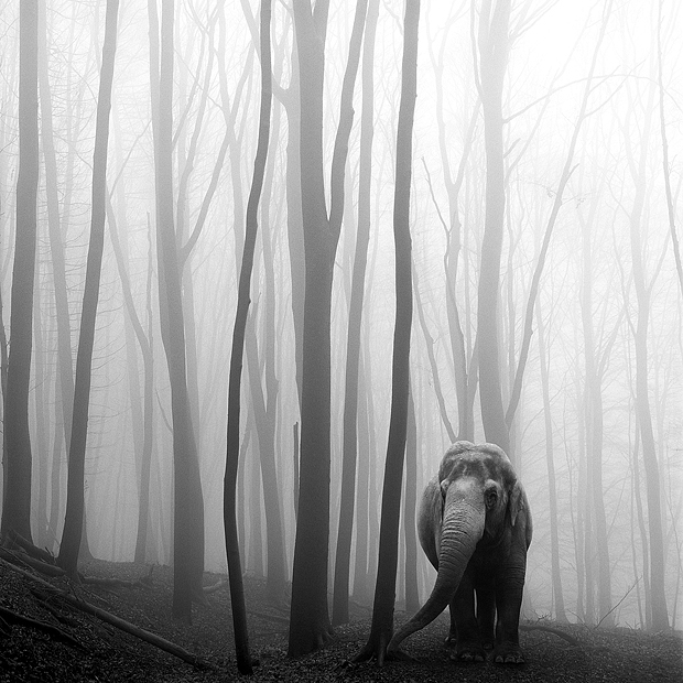 A dark fairy tale of animals lost in the forest mist