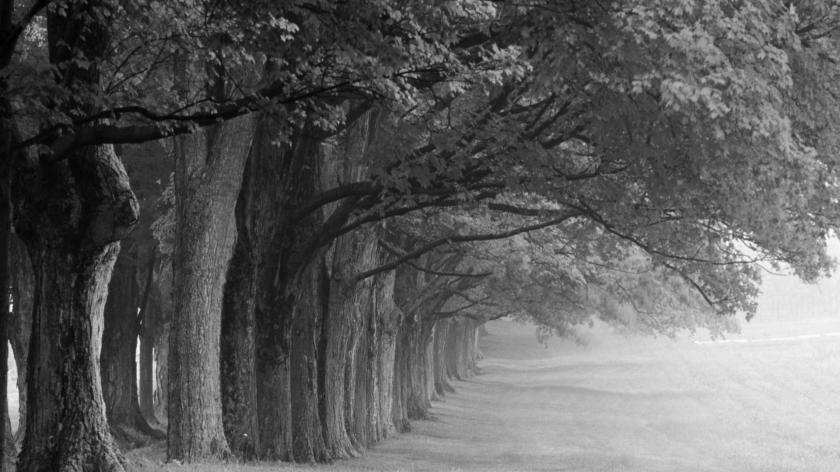 black-and-white-landscape-photography-wallpaper-1369164_black-and-white-photography-of-tree_office_office-space-design-designs-outlet-designer-corporate-ideas-furniture-desk-dental-executive.jpg